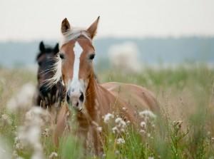 Sarah Kopmann Tierheilpraxis Hude Oldenburg Pferde Hunde Katzen